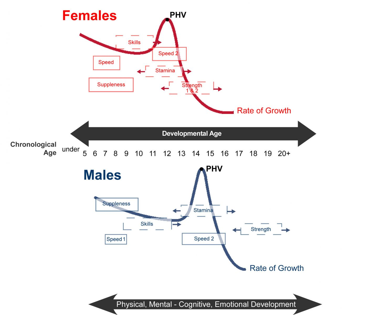 Ltad phvcfemaleandmaleg long term athlete development peak height velocity curve ccuart Image collections